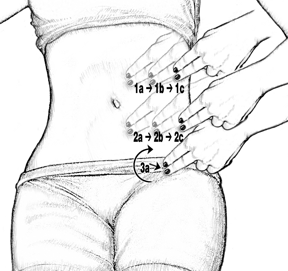 female groin diagram